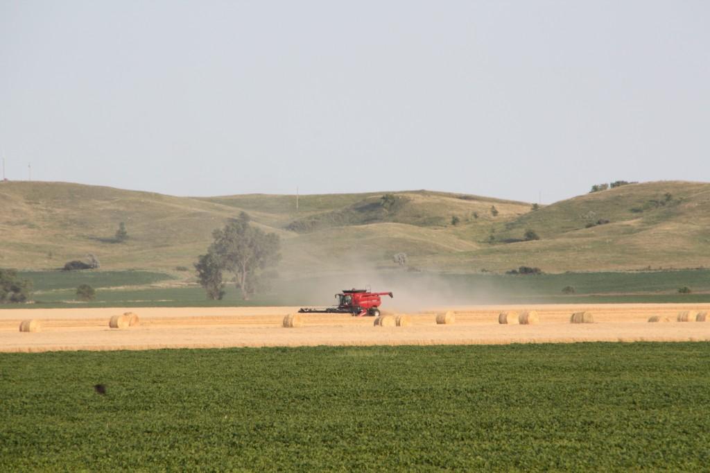 Joe Breker harvests wheat below Coteau des Prairies