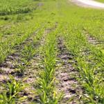Driveway Grass