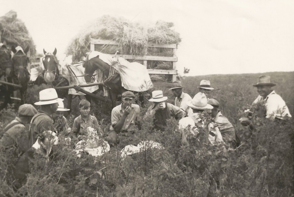 Clarence (center) and younger brother Ralph working with a threshing crew