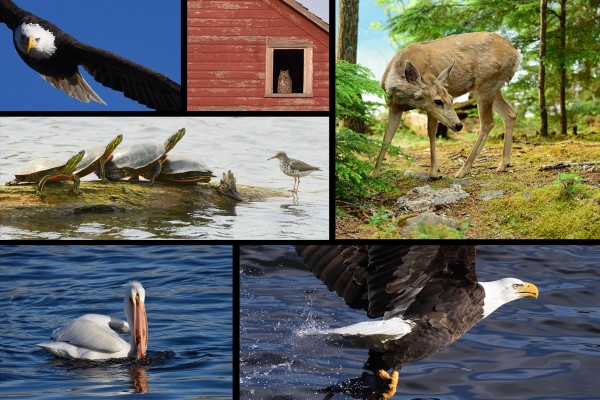 Mark Pfeifer wildlife collage