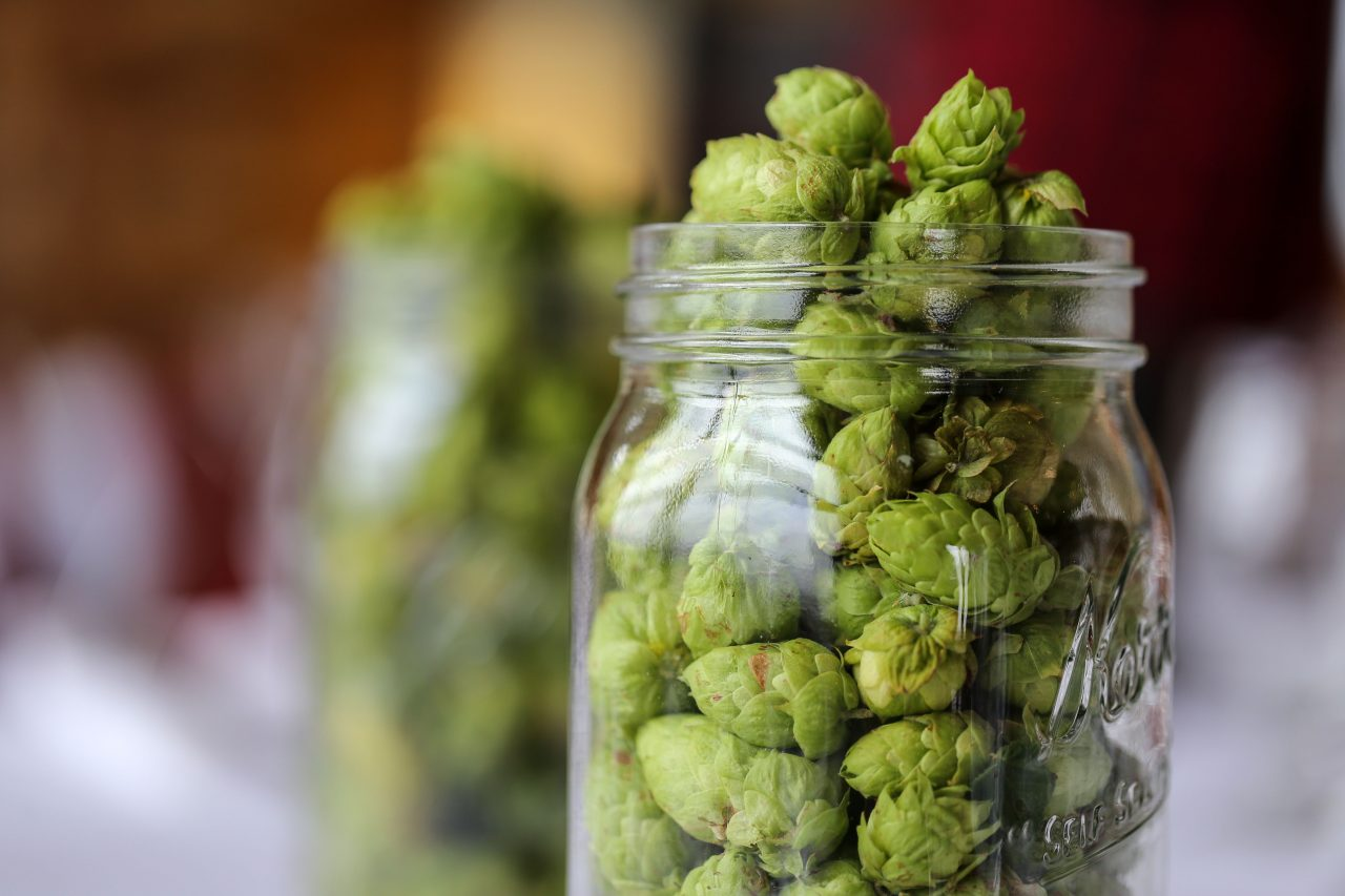Tables decorated with jars of freshly picked hops grown on the Breker farm.